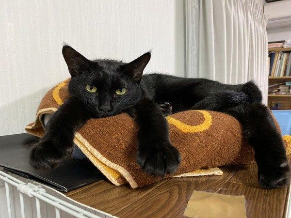猫に居心地のいい家だと思ってもらうためにやるべきこと5つ