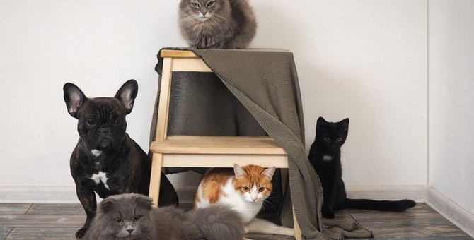 猫が抱えやすい『ストレス5大要素』 解消する最善の方法とは?