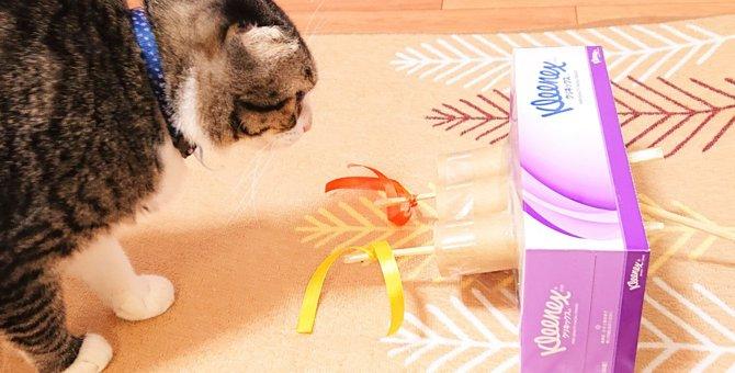 簡単!愛猫の為にもぐらたたき風のおもちゃをティッシュケースで手作り♪