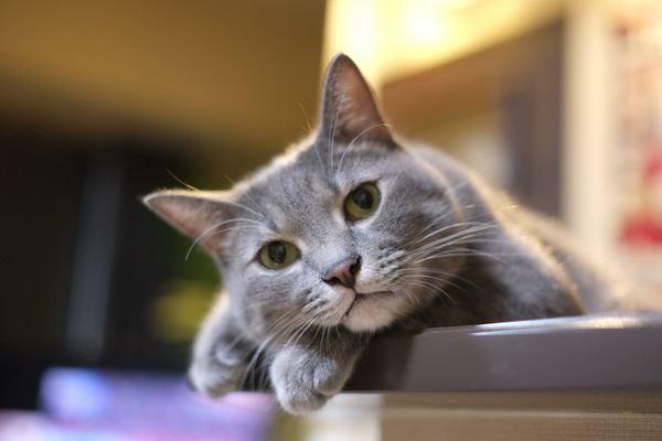 元気がない飼い主を気にかけている猫の行動3つ