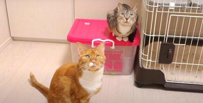 『まだですか〜?』要求が可愛いお喋り猫ちゃんズ♡