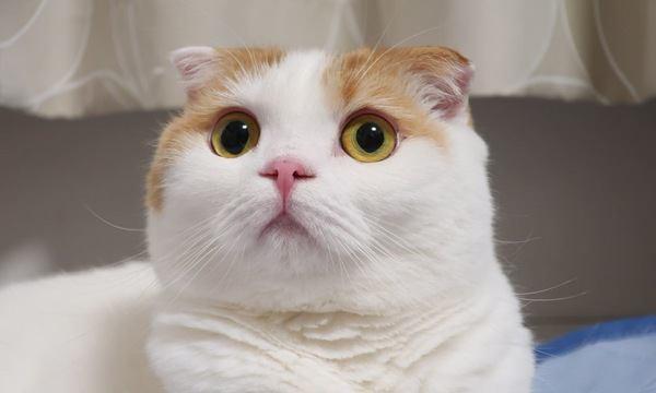 吸い込まれそう…!猫の目がきれいな理由