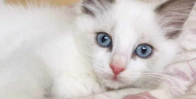 猫はなぜまばたきをあまりしないの?2つの理由