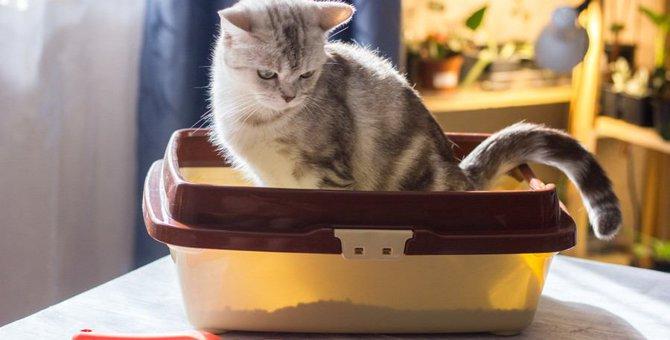 猫のトイレにできる6つの湿気対策