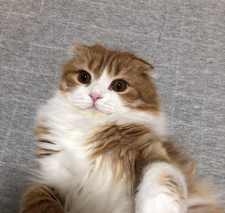 ツンデレ猫との上手な付き合い方5つ