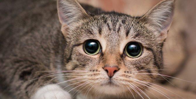 猫にNGな3つの『音』