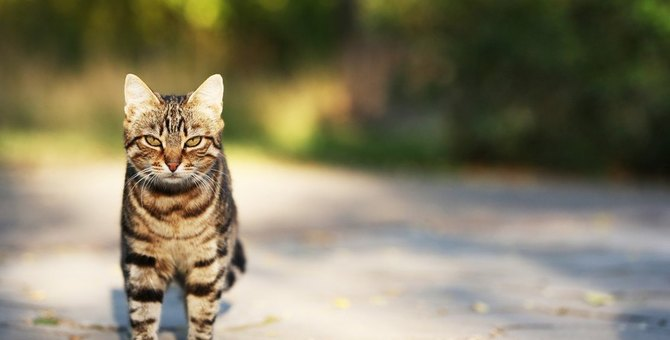 やってない?猫にしちゃダメな6つの飼い方