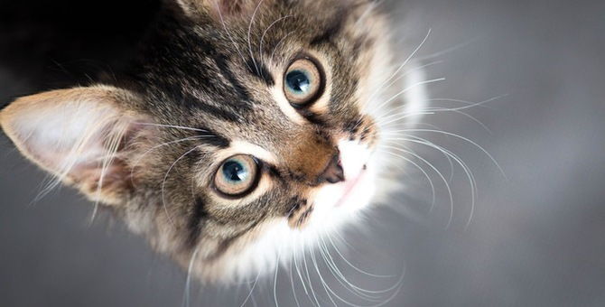 飼っていた猫を里親に出さなければならない・・・そんな時の探し方や注意点
