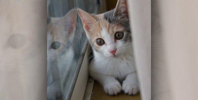 きょうだいは猫白血病で死亡。ウイルスのキャリア?でも、大切な子