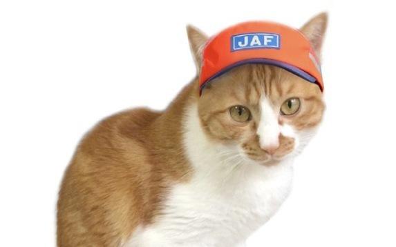 2018年猫のエイプリルフールにあった7つの事