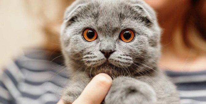 猫とフクロウ違う生き物だけど、何だか似てない?9つの共通点