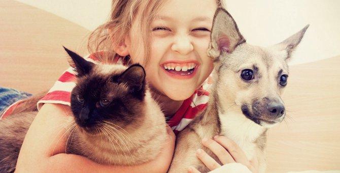 犬好き・猫好きさんの4つの違う所、相性、恋愛傾向