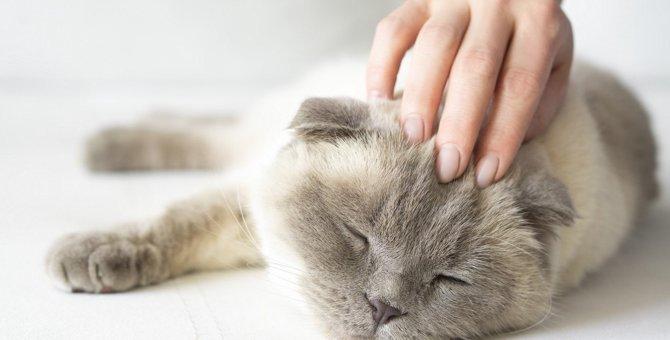 猫の深刻なトラブルに繋がる飼い主の『甘やかし行動』3つ