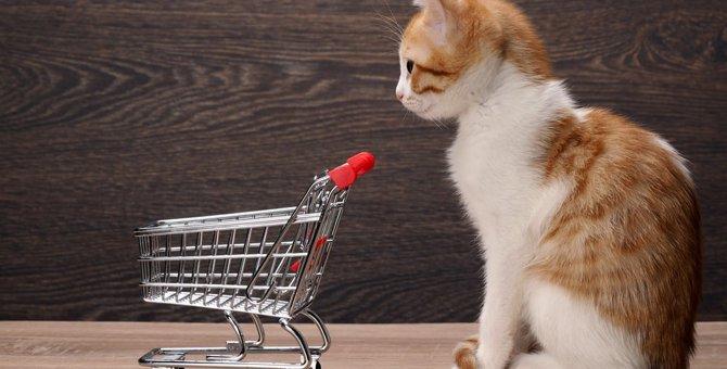 猫をペットショップで購入するメリットや注意点