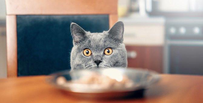 どっちが先?飼い主と猫、食事の順番について