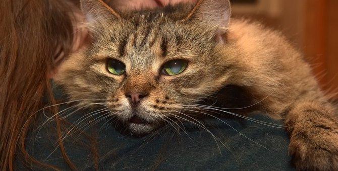 猫が『失明』してしまう4つの原因と予防方法