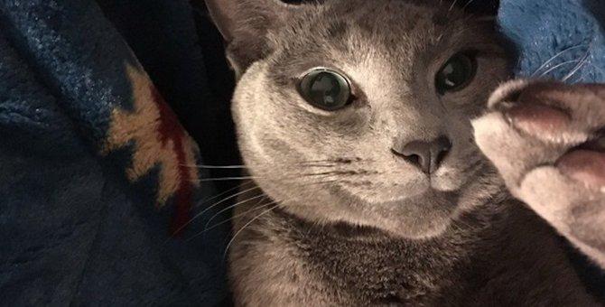 猫も「トリミングサロン」に行った方が良いの?
