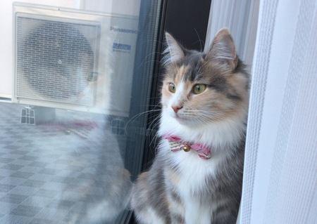 猫がいつもカーテンの裏にいるのはどうして?