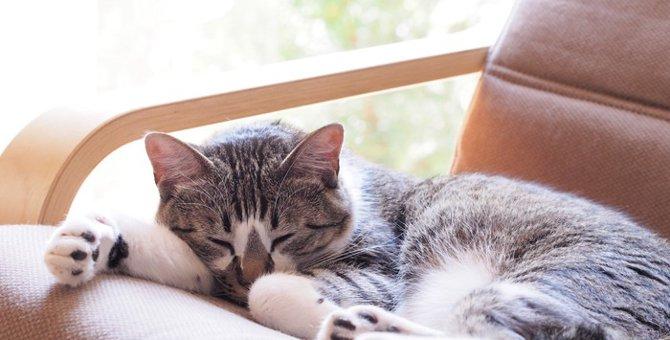 猫が発作を起こした時の対処法や症状