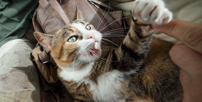 猫が見せる『異常行動』5つ!放っておくと大変なことに…