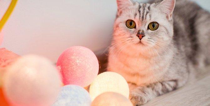 猫は光るものが好き?嫌い?