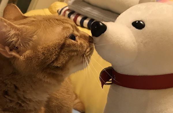 猫が尊敬している人にする行動5つ