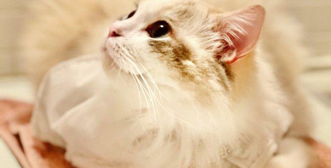 猫が呼んでも『知らん顔』する5つの理由!危険な場合も…?