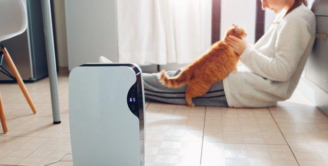 猫に『加湿器』は必要?選ぶ際の注意点5つ
