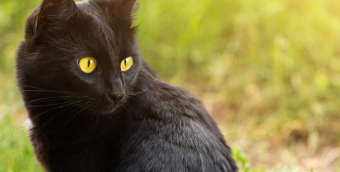 ドイツ語で猫はkatze(カッツェ)ことわざや鳴き声、名前など雑学をご紹介!