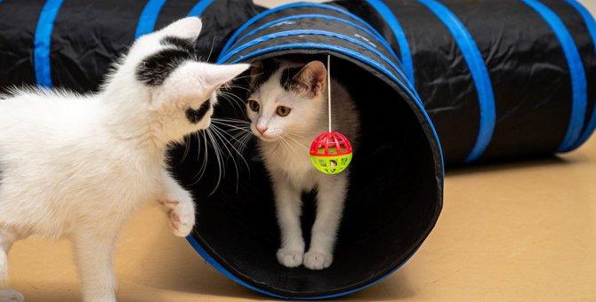 猫が『トンネルおもちゃ』を喜ぶ理由3つ!簡単DIYレシピを紹介♡