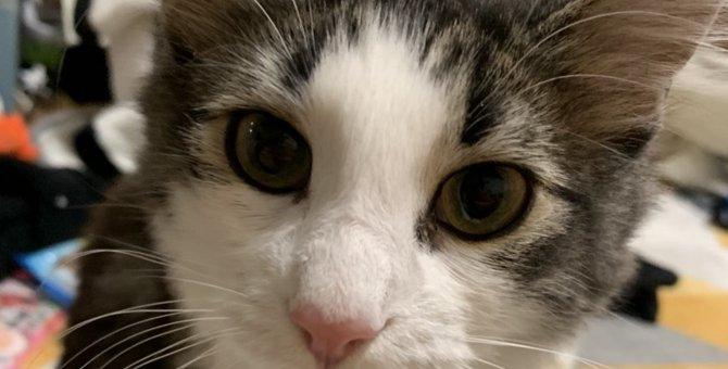猫が飼い主を『心配しているとき』にする行動5つ
