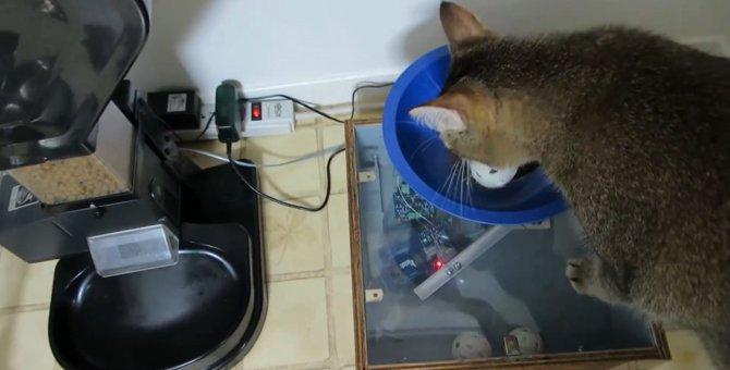 """飼い主さんの画期的発明!猫の""""自力""""給餌器"""