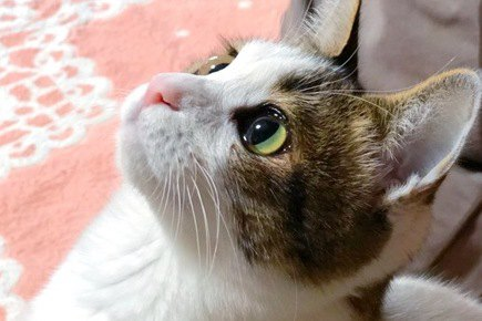 猫が飼い主の『顔色を伺っている時』に見せる4つの行動