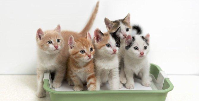 猫がトイレでしてくれない本当の意味