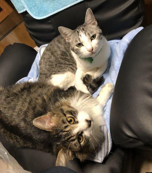 ハンサム猫とむっちり猫が我が家にやってきた!譲渡会で出会った2匹の子猫のお話