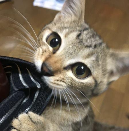 猫の甘噛みはほっといて大丈夫?