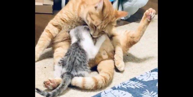 母性の目覚め?赤ちゃんのニーズで授乳をOKするイクメン猫が話題