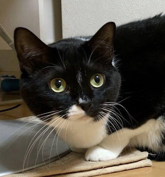 『猫は幽霊が見える』ってホント?何もない所をずっと見ている理由とは?