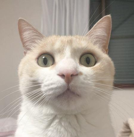 どうして?猫の目がまん丸になったり細くなったりする理由
