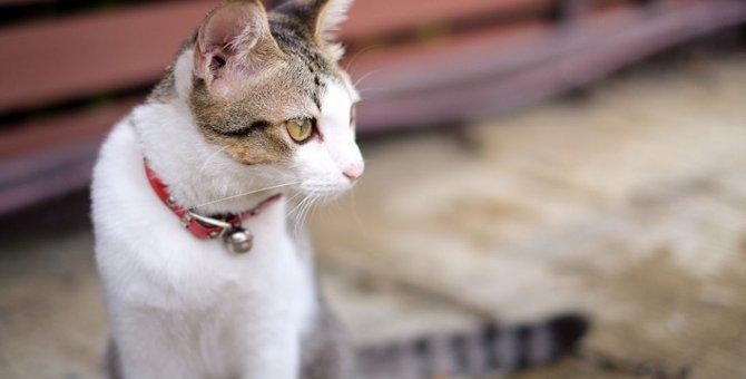 猫に鈴をつけるメリットやその際の注意点について