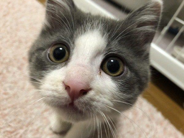 猫にとっての『最高に嬉しいこと』5つ