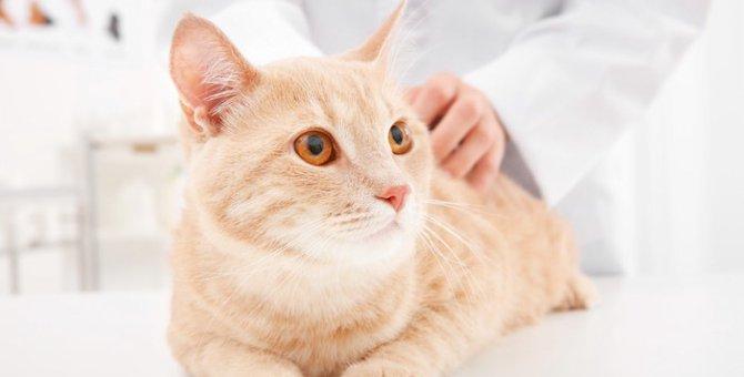 猫の腹膜炎の症状や原因、治療法とは