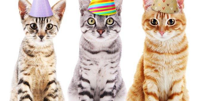 東京で開催される猫のイベント10選!