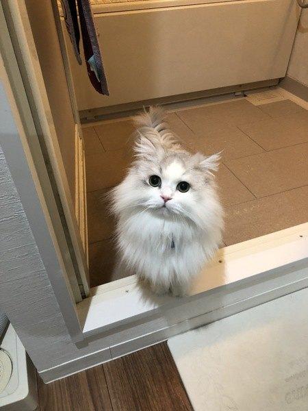 お風呂場に猫が来るのはどうして?6つの心理