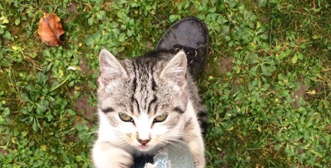 猫が飼い主の足にしがみつく7つの理由と対処法