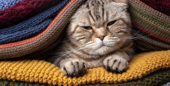 猫を『欲求不満』にさせない生活環境5選!ストレスになりやすい要因とは?