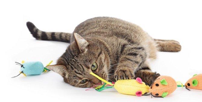 クレイジーマウスは猫専用のおもちゃ!特徴や使った感想など