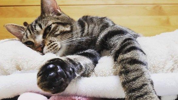 猫の肉球にはこんなヒミツが!驚くべき隠された役割5選