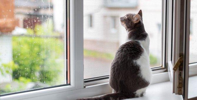 猫が『最高に好きなこと』ランキングTOP3!テンション爆上がりすることとは?