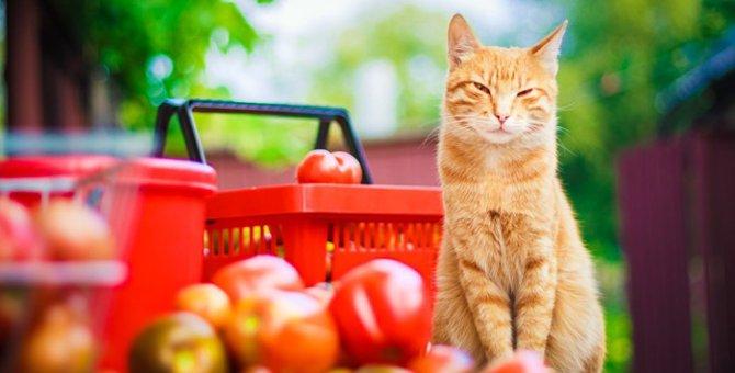 猫にトマトを食べさせる時の正しい与え方と注意点